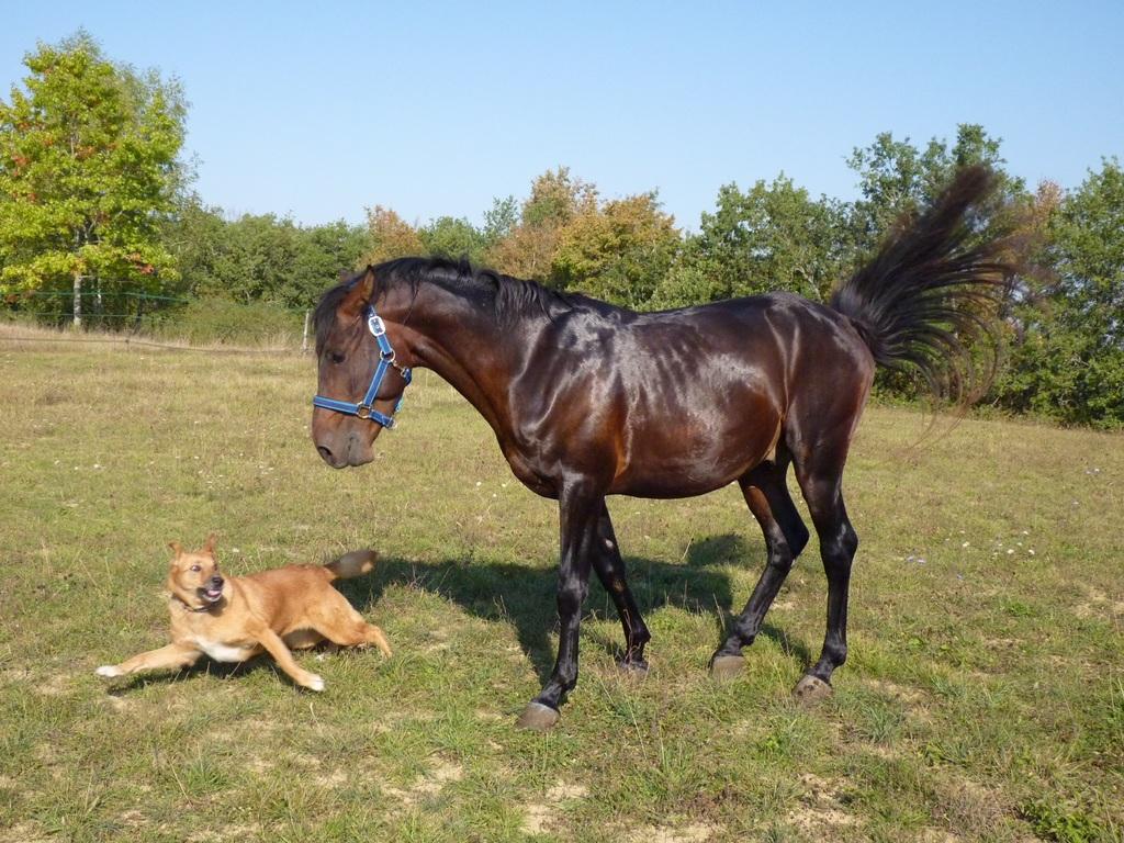 Das Leben mit einem Pferd