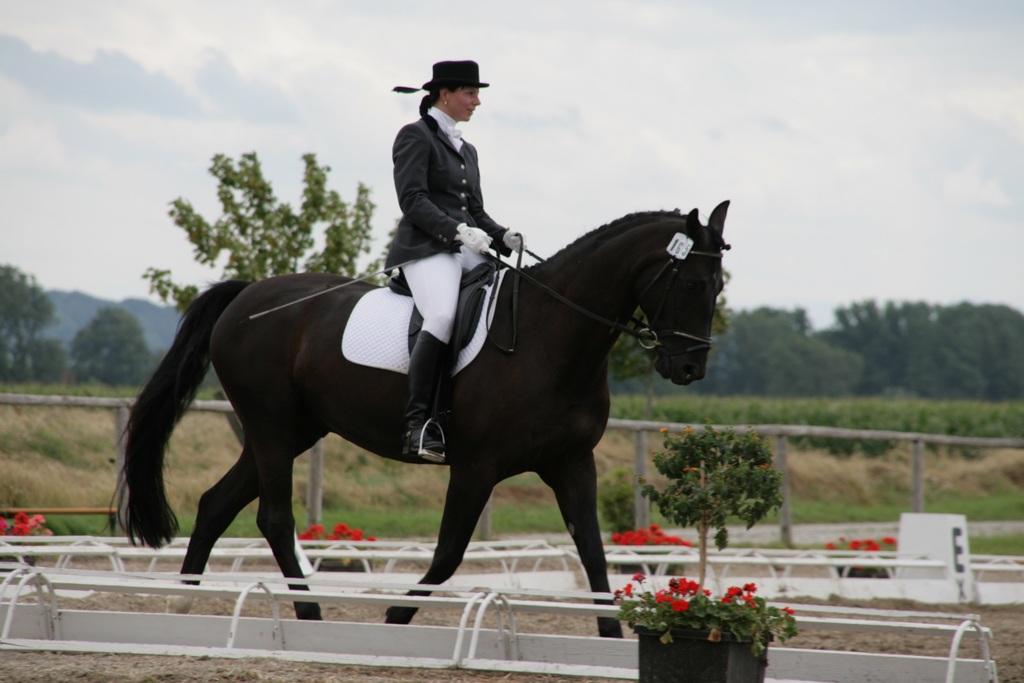 Pferdesport überhaupt