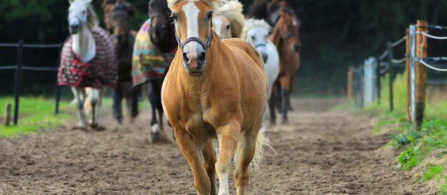 Das kleine Pferde-ABC