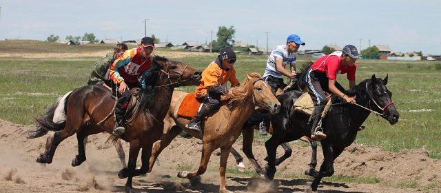 Die kostspieligsten Pferde der Welt